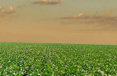 ABPM discute com Governo política nacional de fertilizantes